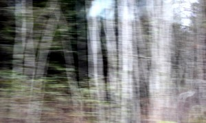 Skog-forest #2