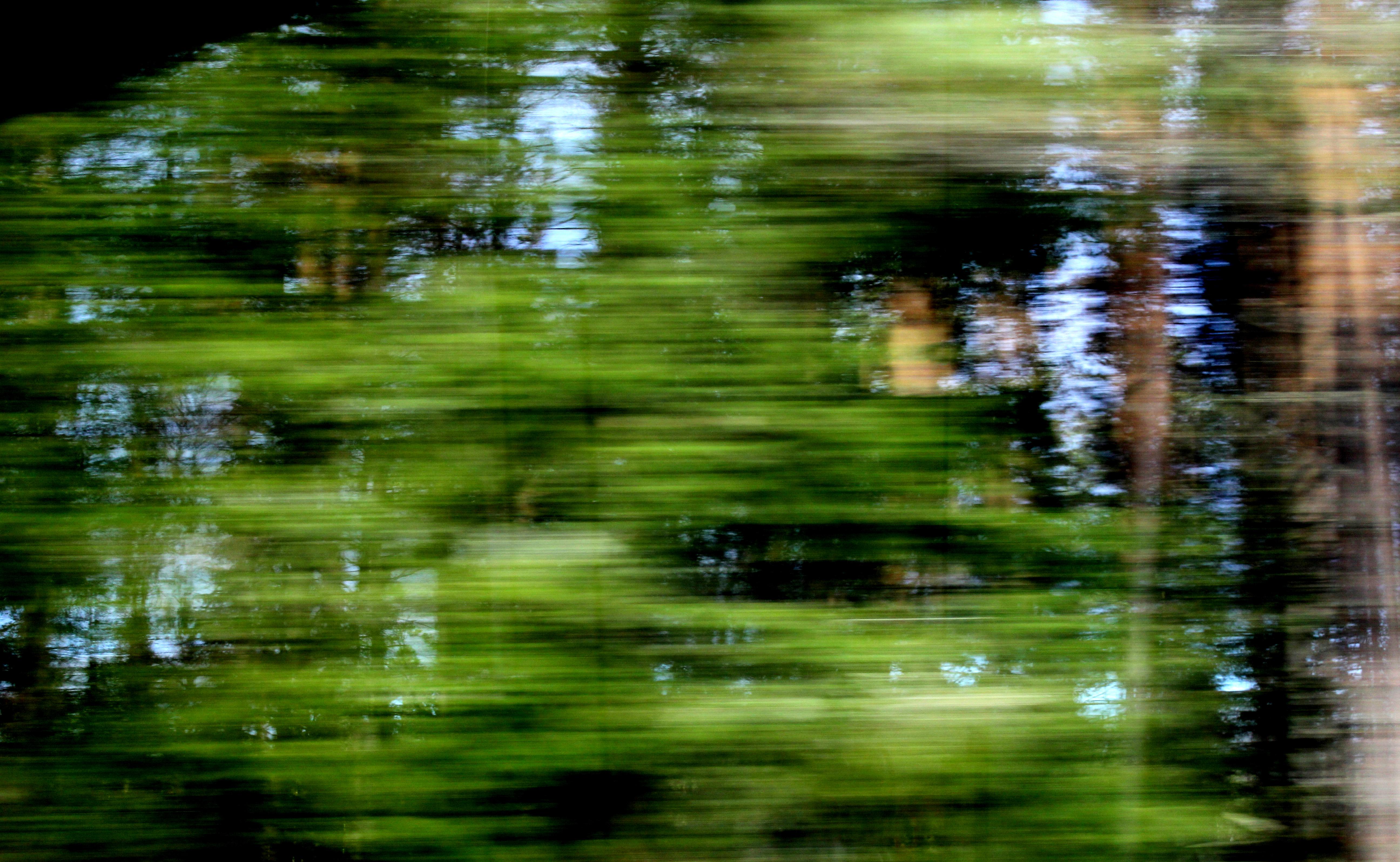 Skog-forest #3