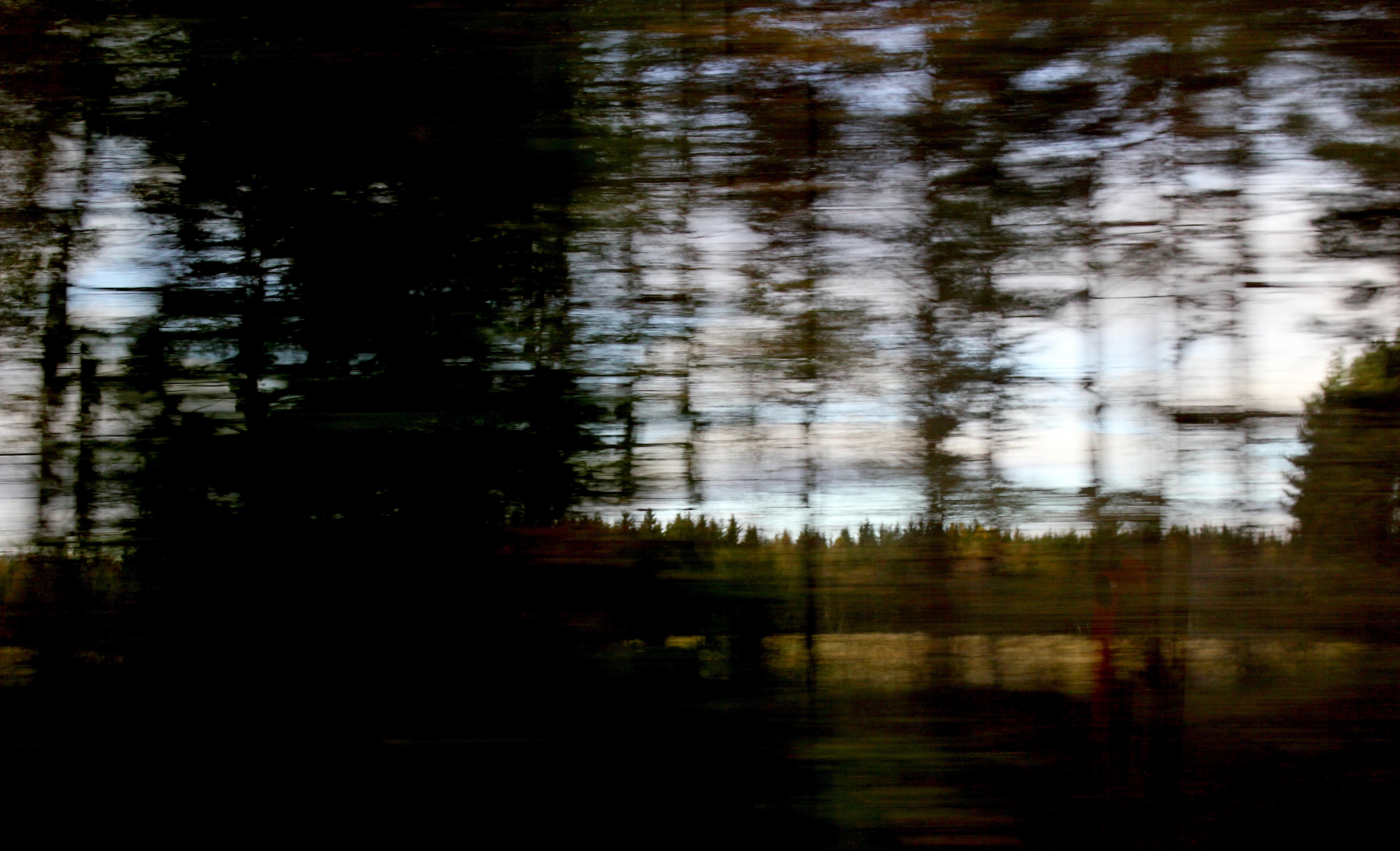 Skog-forest #4