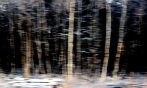 Skog-forest #5