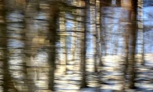 Skog-forest #6